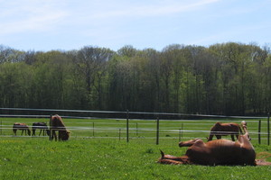 chevaux de sport, formation cavaliers, cheval Sauvigny les bois